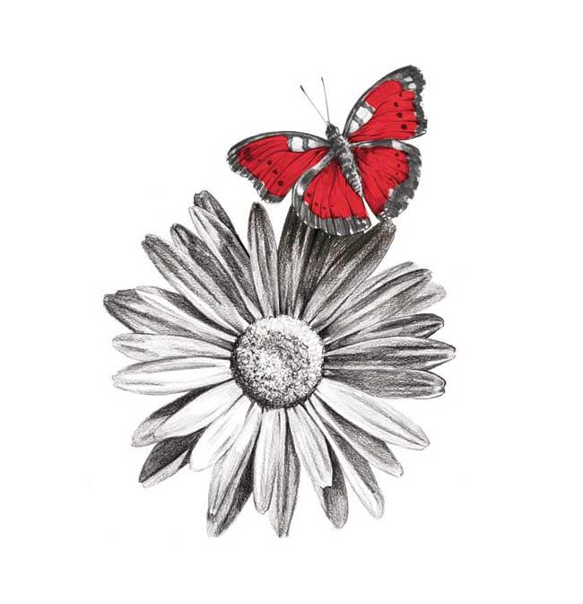 Blés illustration