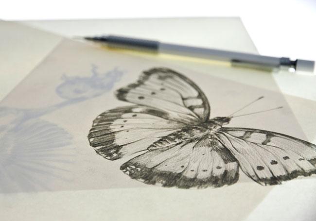 Blés sketches