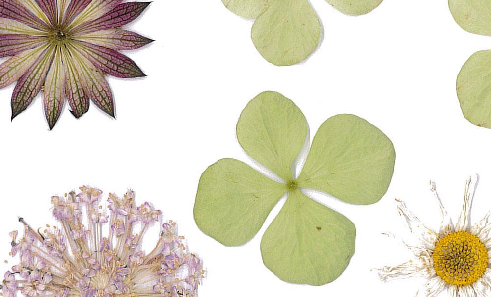 Fleurapy flowers